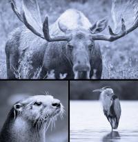 Advanced Animal Totems Online Program